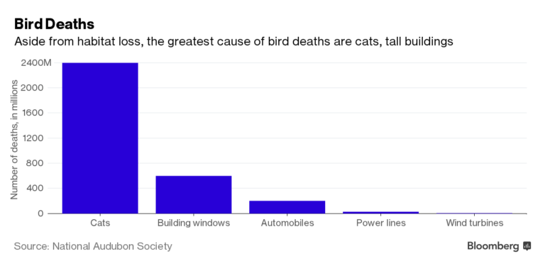 bloomberg bird deaths graphic aside from natural causes